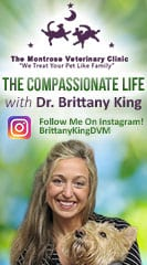 Dr. Brittany King