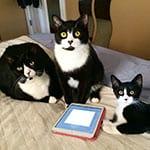 Deb &  The Tuxedo Trio